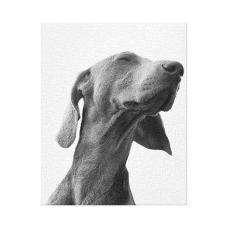 Sueño del perro lienzo