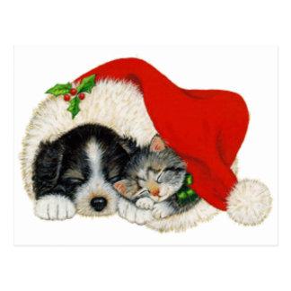 Sueño lindo del perrito y del gatito en un gorra postal