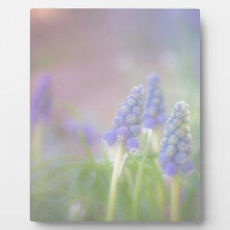 Sueño púrpura placa expositora