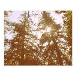 Sun a través de árboles foto