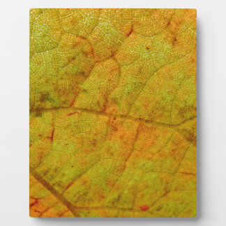 Superficie inferior de la hoja de la uva placa expositora