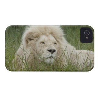 Suráfrica, Londres del este, Inkwenkwezi privado iPhone 4 Protectores