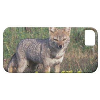 Suramérica, Chile, Torres del Paine NP, iPhone 5 Case-Mate Coberturas