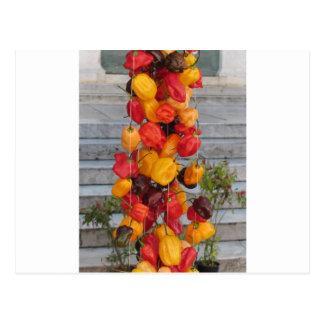 Surtido de pimientas de chiles coloridas postal
