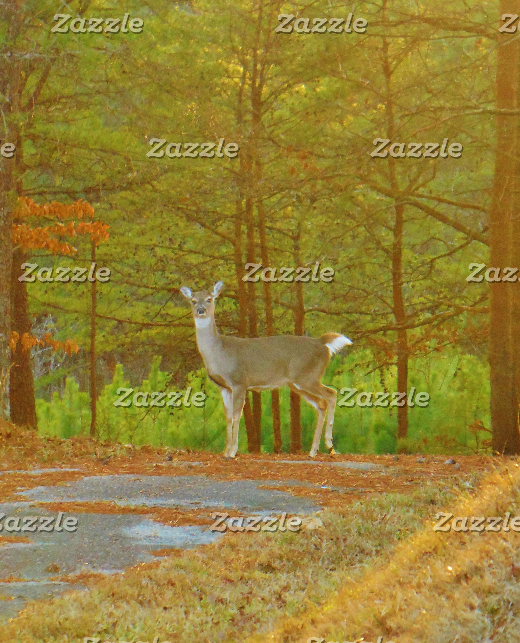 Deer in the Pines
