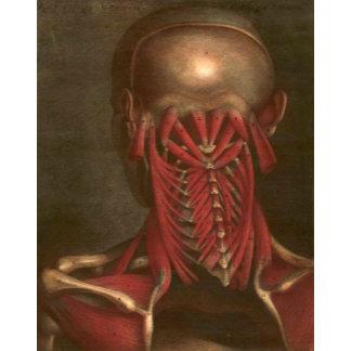 Vintage Anatomy   Neck and Shoulders II
