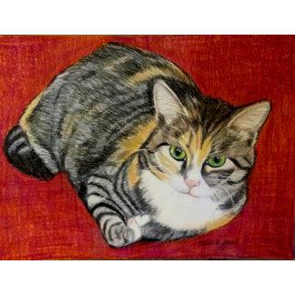 Cats - Calico