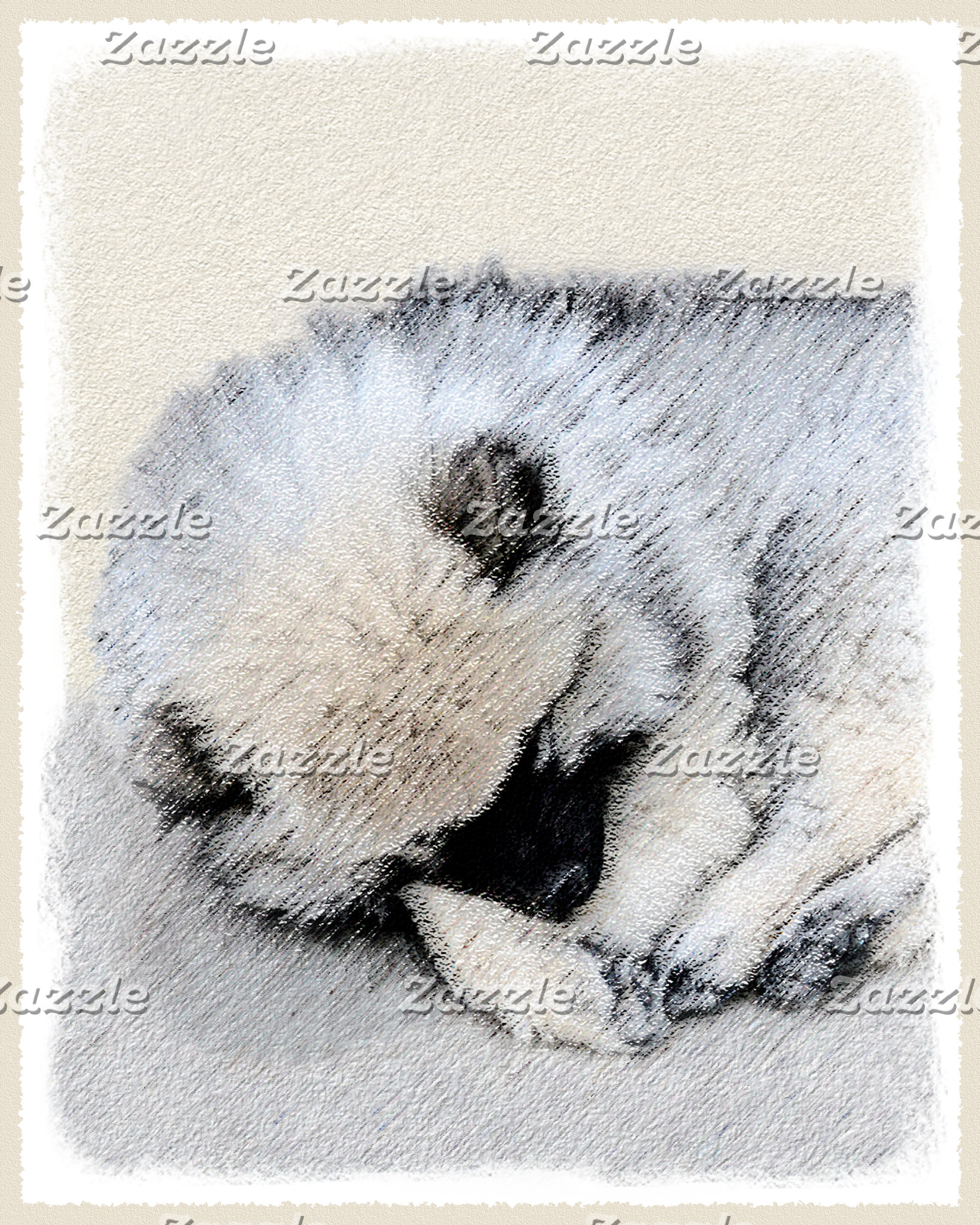 Keeshond Puppy (Sleeping)