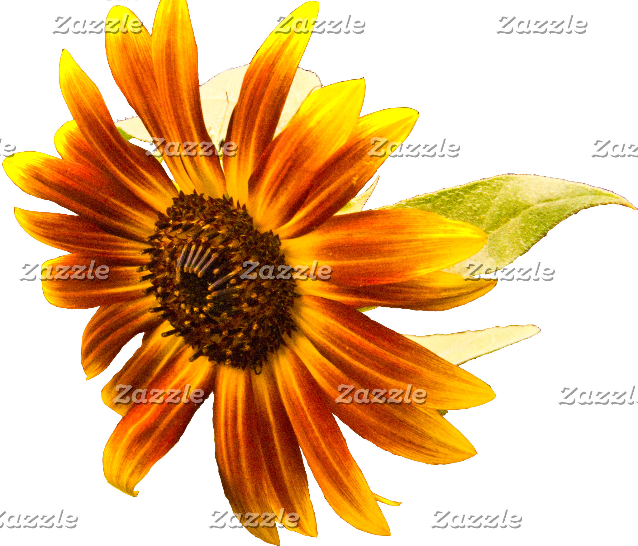 Sunshine Super Sunflower