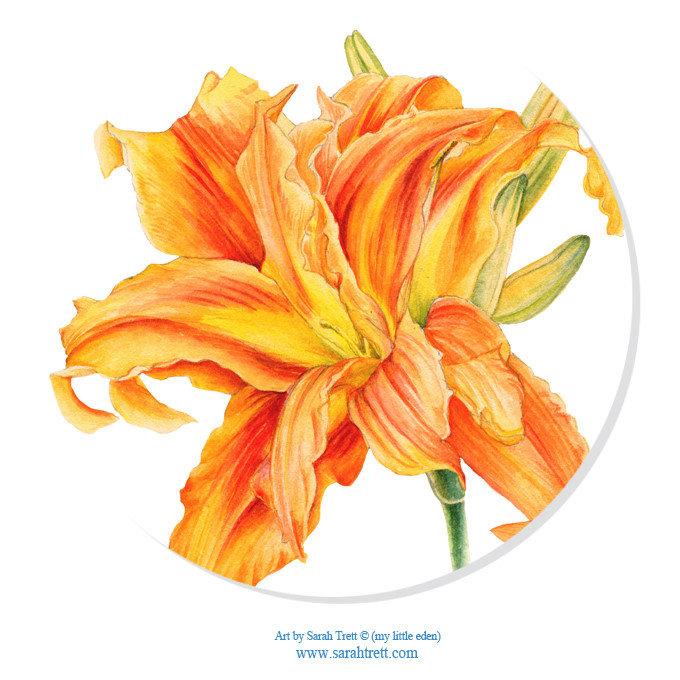 Daylily Watercolor Botanical