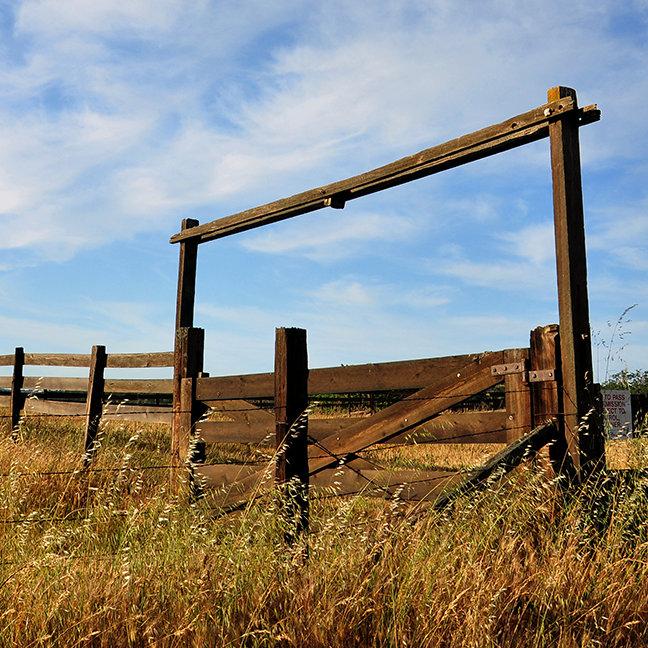 Fences in Field
