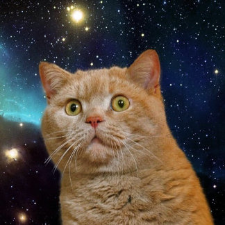 Cat staring at the universe