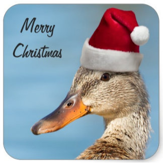 Santa Ducks