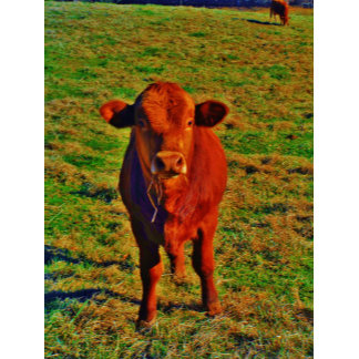 BABY BROWN COW EATING