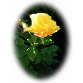 Yellow Rose Designs