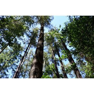Scenic - Trees & Mountains