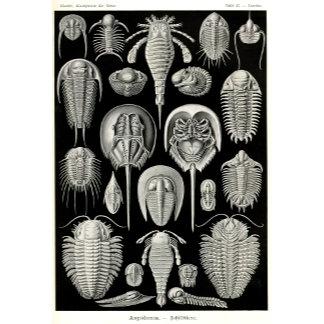 Ernst Haeckel Aspidonia