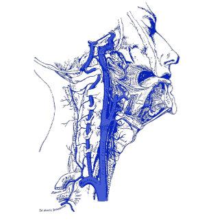 Vintage   Internal carotid & vertebral arteries