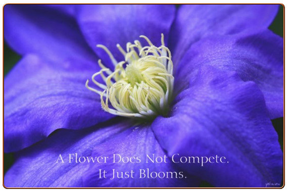Flower Does Not Compete Quote & Purple Wildflower