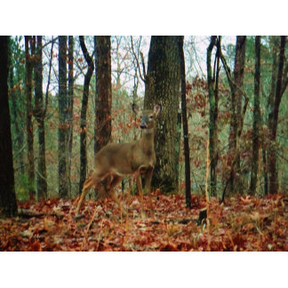 Camo,Camouflage Deer pillow