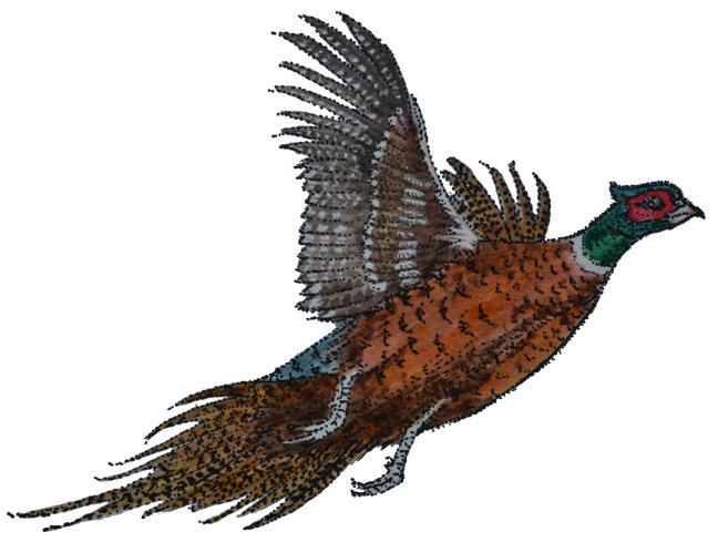 Pheasants in Flight