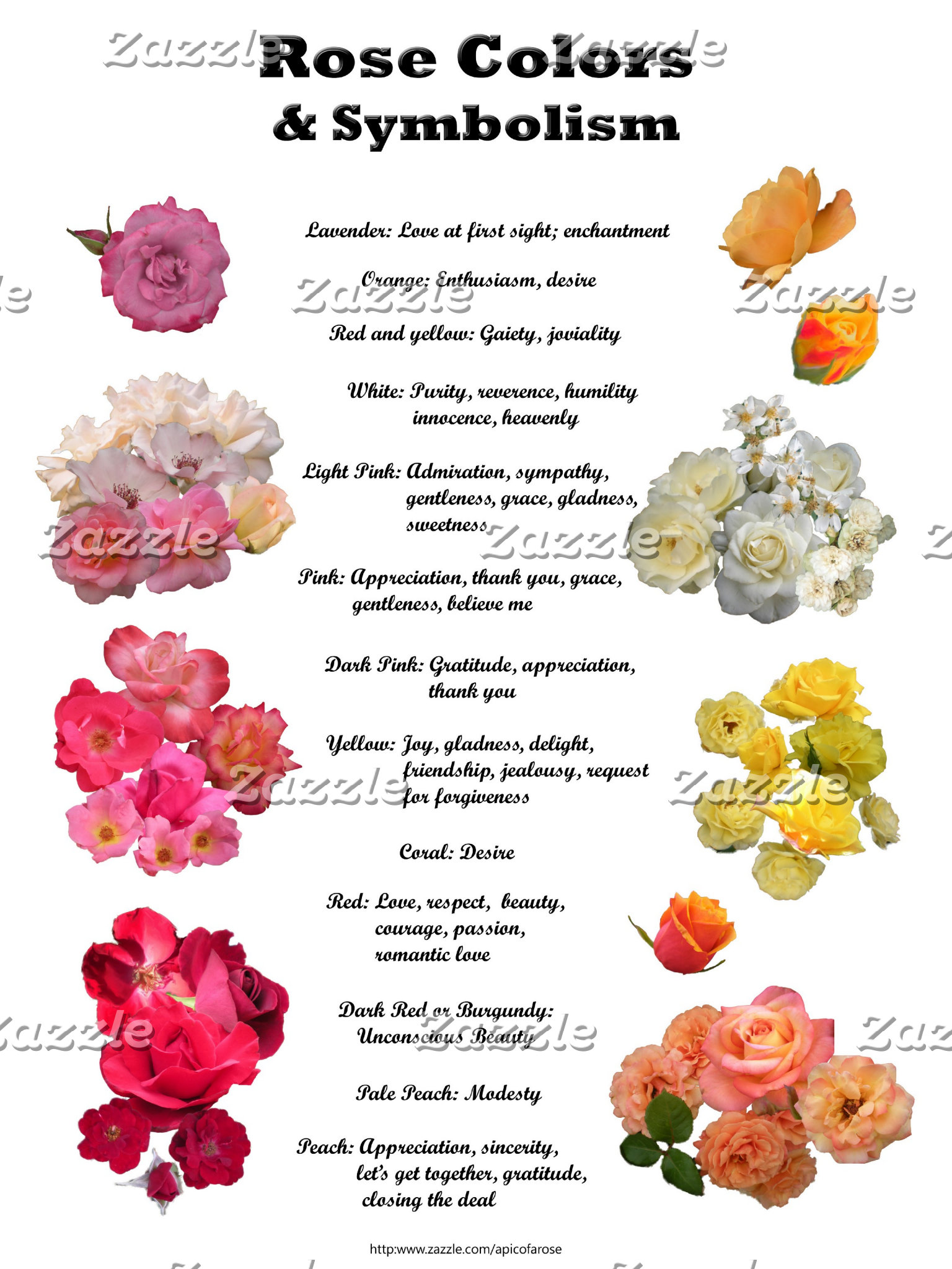 Rose Colors and Symbolism