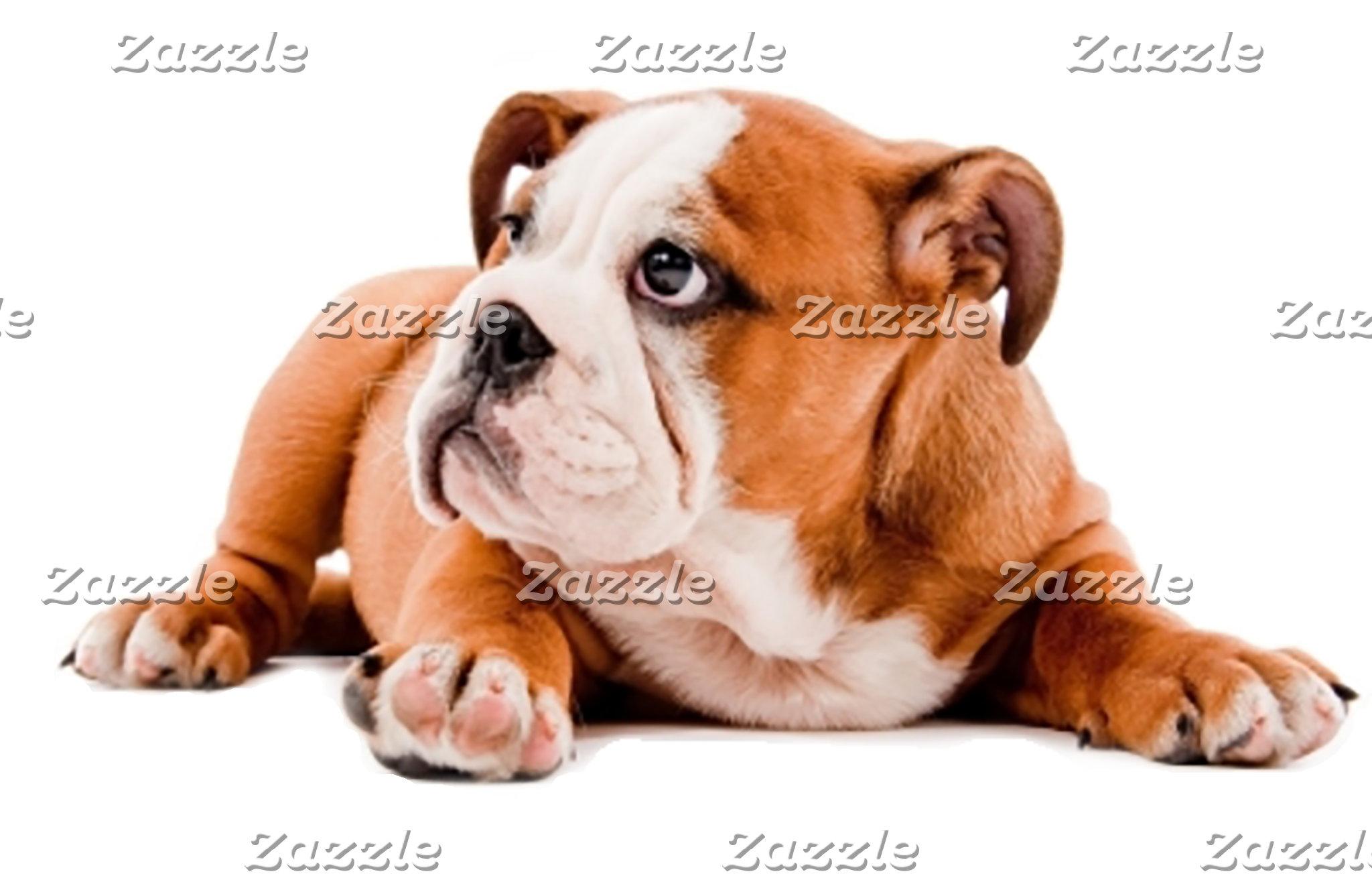 Bulldog - English