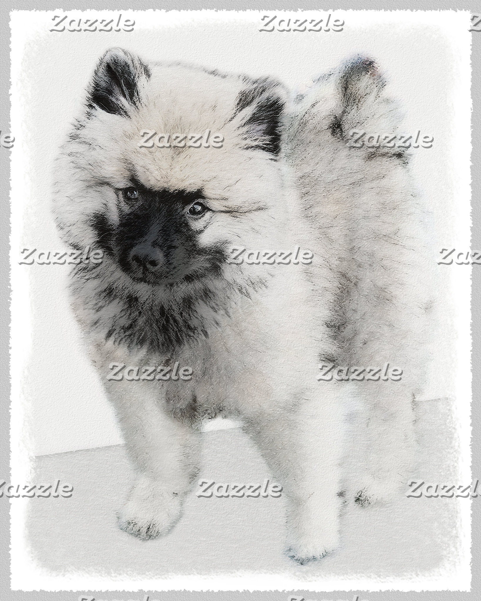 Keeshond Puppy (Drawing)