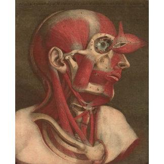 Vintage Anatomy   Head II
