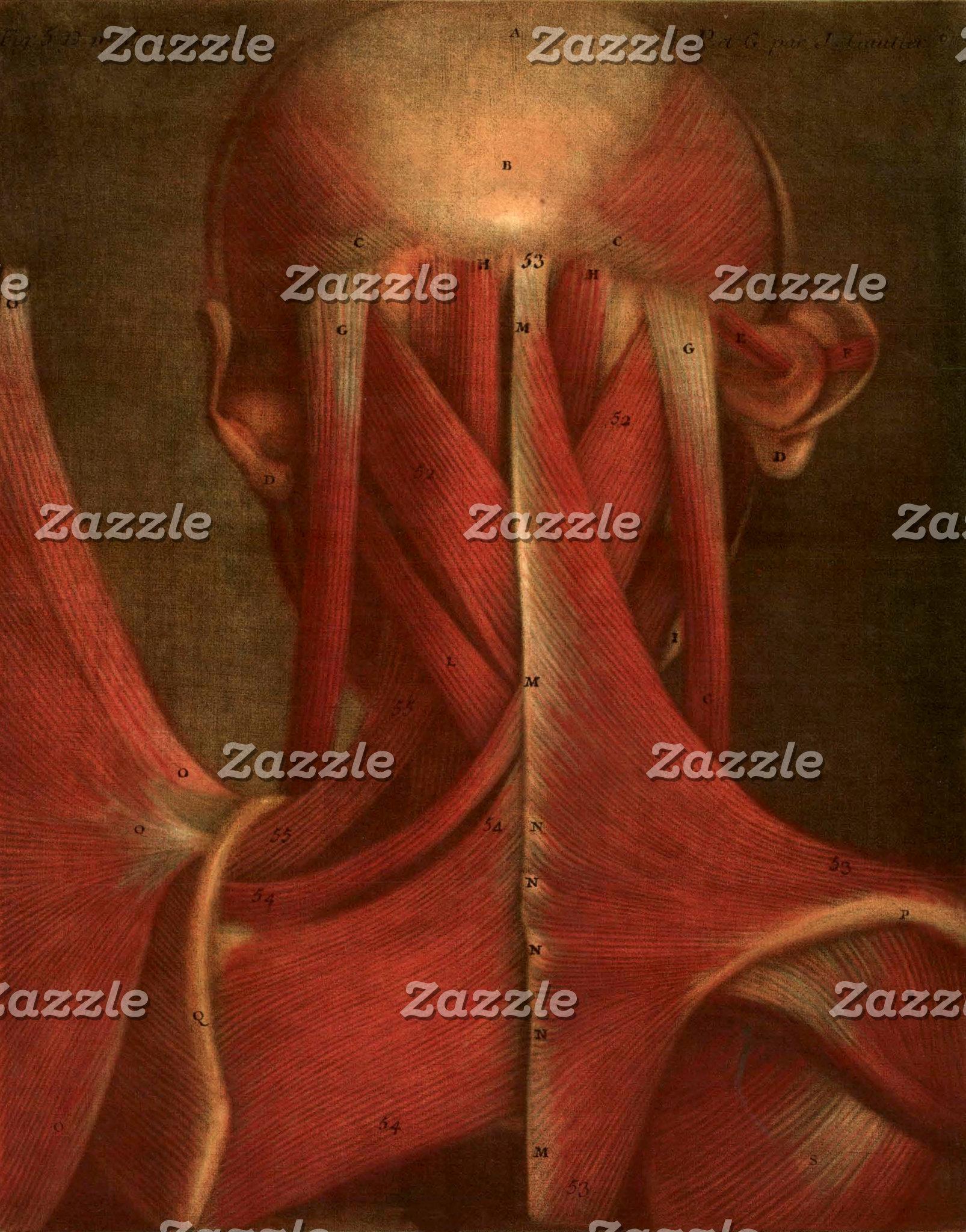 Vintage Anatomy Illustration | Neck