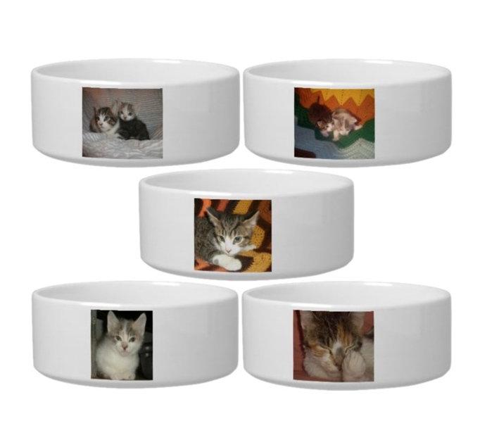 Cat Bowls