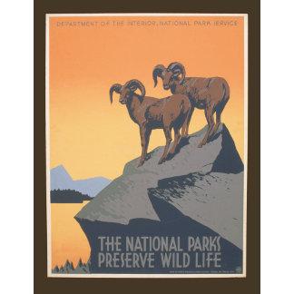 Vintage - Preserve Wildlife