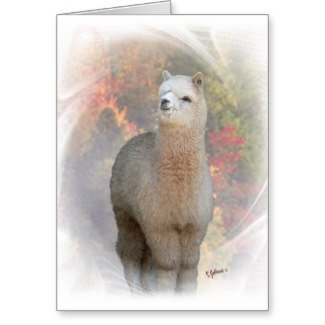Cards, Postcards, Stationery