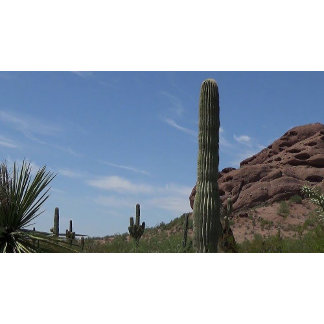 Desert Stone Collection