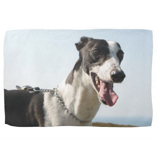 Greyhound teatowels
