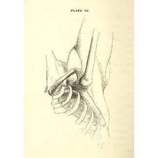 Vintage Anatomy   Shoulder Joint