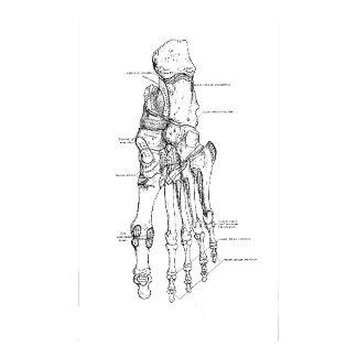 Vintage Anatomy Bones of the Foot