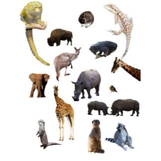 Animals,-Wildlife,-Products.