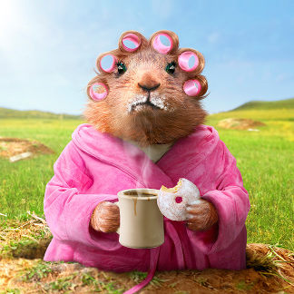 Morning Groundhog with Breakfast Donut and Coffee