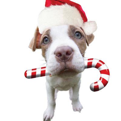 Christmas pitbull - santa pitbull -santa claus dog
