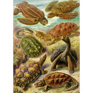 Ernst Haeckel Turtles Chelonia