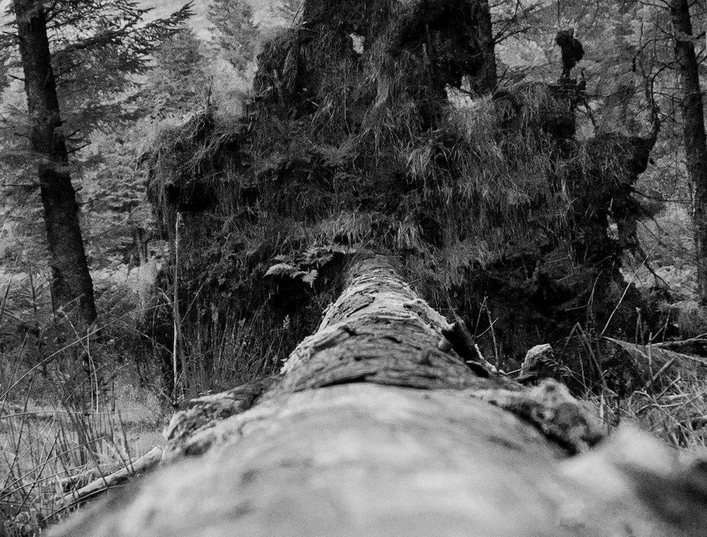 Original Photography :Beyond the fallen tree