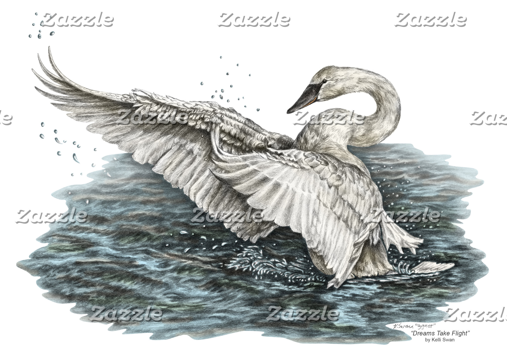 White Swan on Water