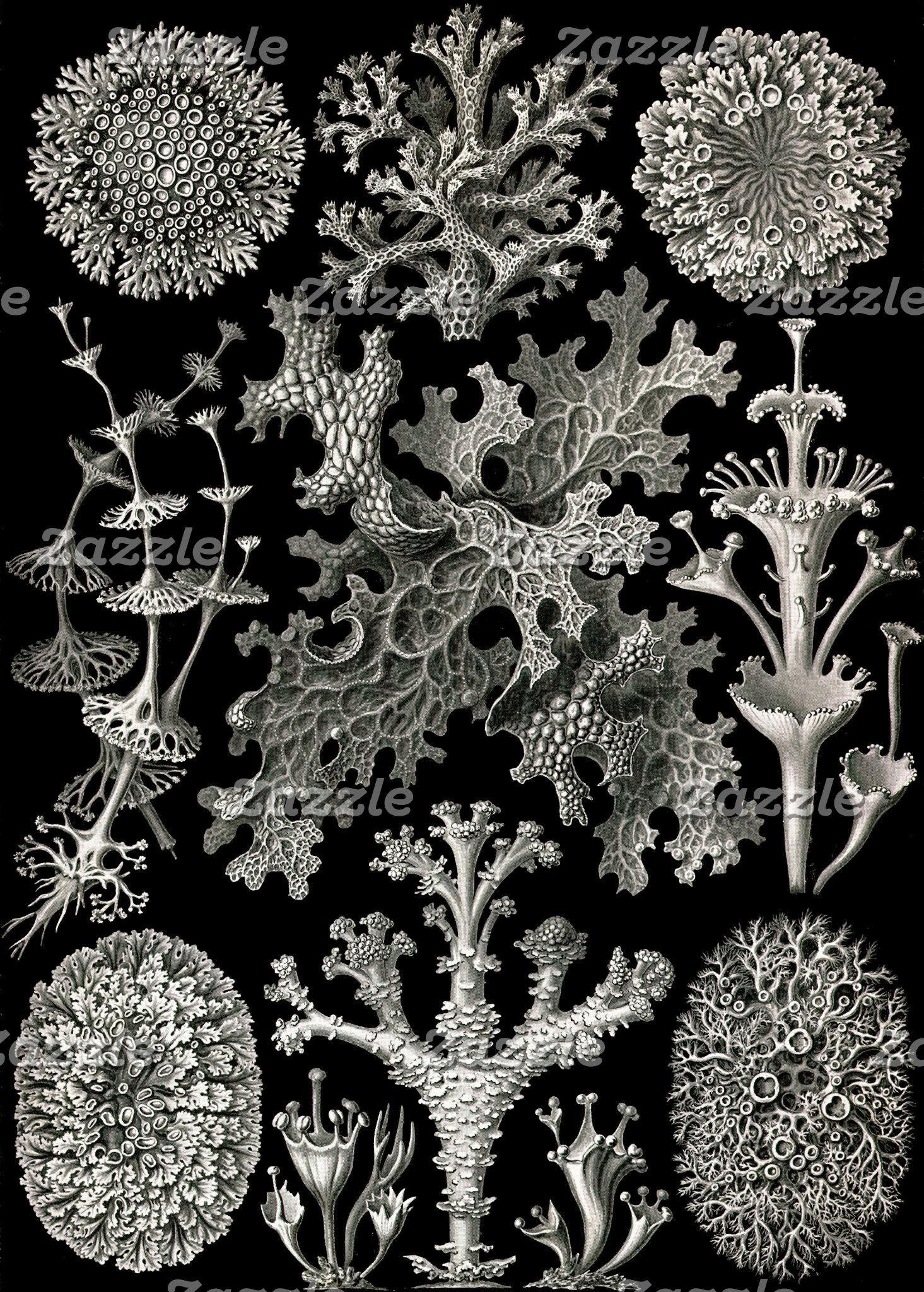 Ernst Haeckel Lichens