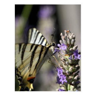 Swallowtail escaso (podalirius de Iphiclides) Postal