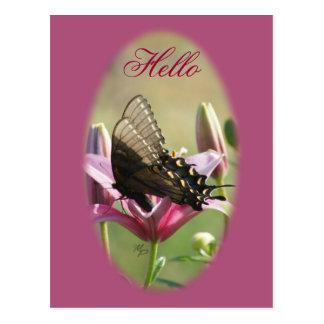 Swallowtail negro en la postal del espacio en