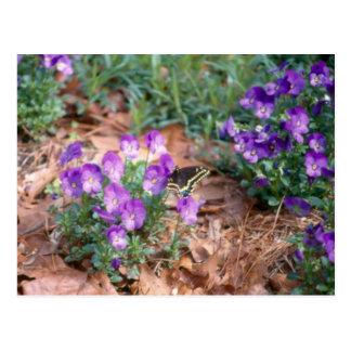 Swallowtail y postal de la viola