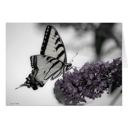 Swallowtail y sombras tarjeta de felicitación