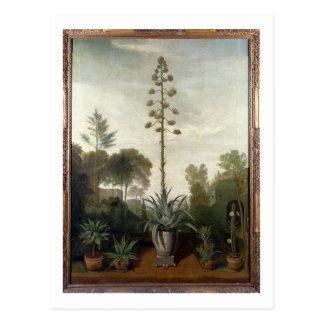 T33047 un jardín botánico postal
