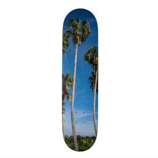 Tabla De Skate Palmas que curvan altas